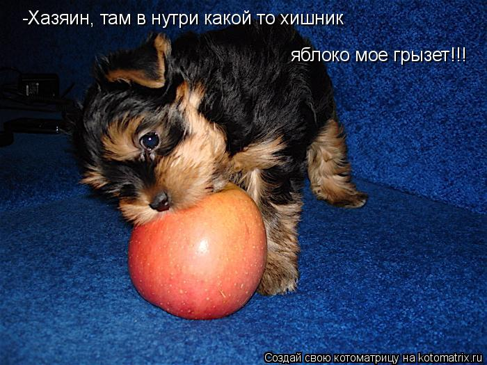 Котоматрица: -Хазяин, там в нутри какой то хишник яблоко мое грызет!!!