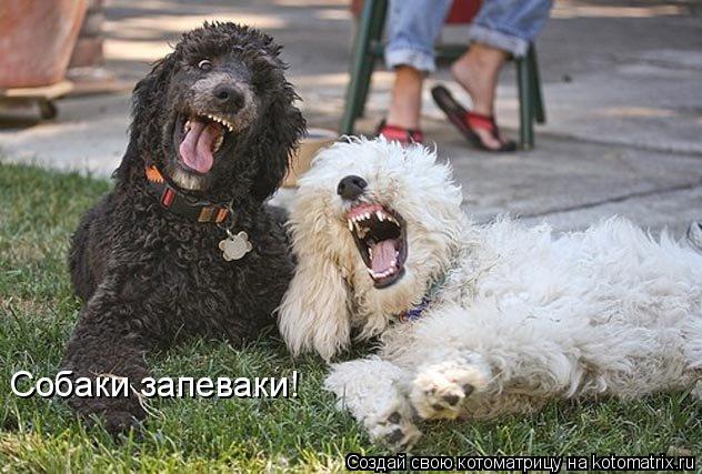 Котоматрица: Собаки запеваки!