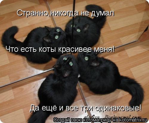 Котоматрица: Странно,никогда не думал Что есть коты красивее меня! Да ещё и все три одинаковые!