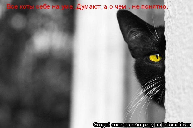 Котоматрица: Все коты себе на уме. Думают, а о чем — не понятно.
