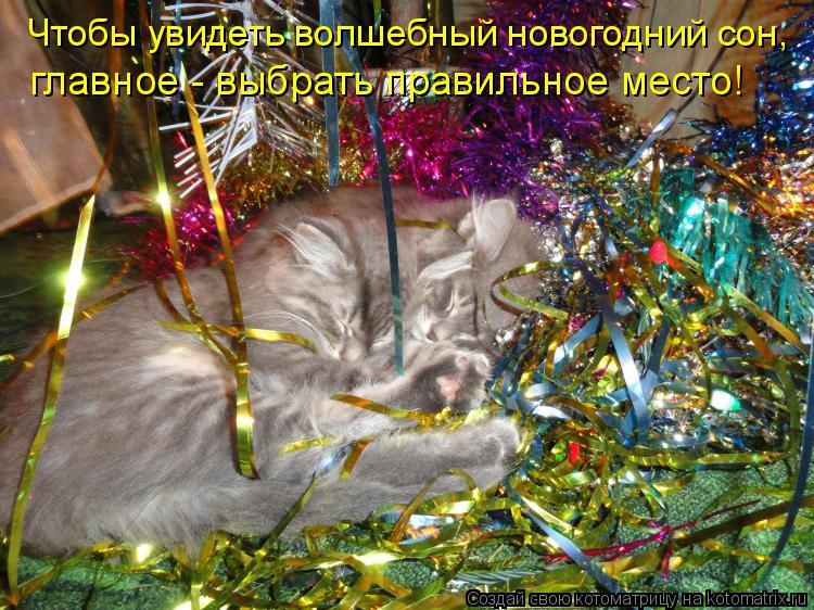 http://kotomatrix.ru/images/lolz/2011/01/03/783254.jpg