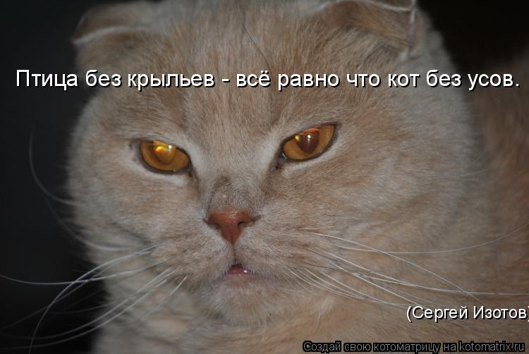 Котоматрица: Птица без крыльев - всё равно что кот без усов.    (Сергей Изотов)
