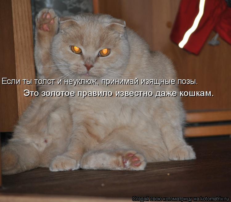 Котоматрица: Если ты толст и неуклюж, принимай изящные позы.   Это золотое правило известно даже кошкам.