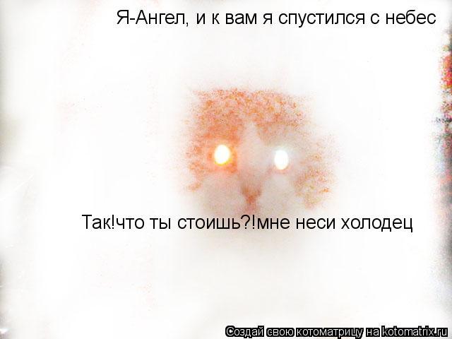 Котоматрица: Я-Ангел, и к вам я спустился с небес Так!что ты стоишь?!мне неси холодец