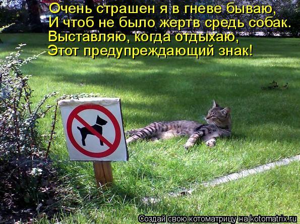 Котоматрица: Очень страшен я в гневе бываю, И чтоб не было жертв средь собак. Выставляю, когда отдыхаю, Этот предупреждающий знак!