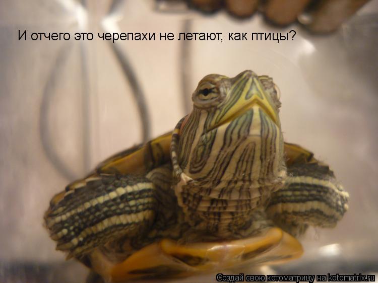 Котоматрица: И отчего это черепахи не летают, как птицы?