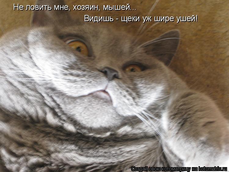 Котоматрица: Не ловить мне, хозяин, мышей... Видишь - щеки уж шире ушей!