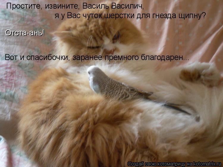 Котоматрица: Простите, извините, Василь Василич, я у Вас чуток шерстки для гнезда щипну? Отста-ань! Вот и спасибочки, заранее премного благодарен...