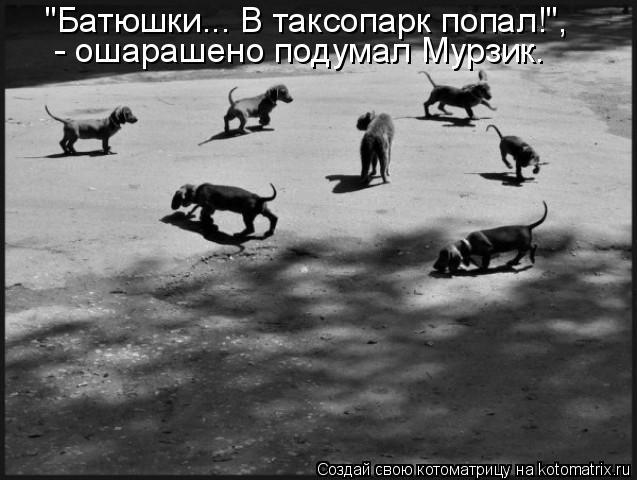 """Батюшки... В таксопарк попал!"",  - ошарашено подумал Мурзик."