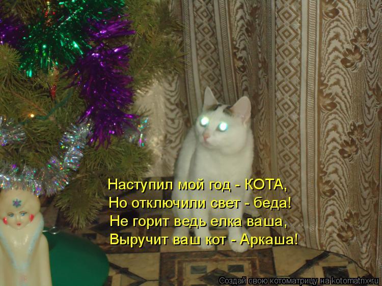 Котоматрица: Не горит ведь елка ваша, Выручит ваш кот - Аркаша! Но отключили свет - беда! Наступил мой год - КОТА,