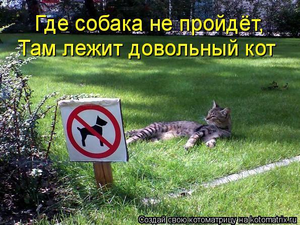 Где собака не пройдёт, Там лежит довольный кот