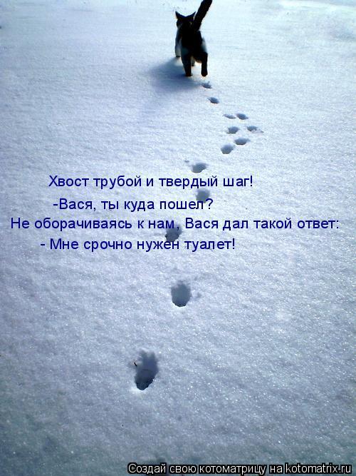 Котоматрица: Хвост трубой и твердый шаг! Не оборачиваясь к нам, Вася дал такой ответ: - Мне срочно нужен туалет! -Вася, ты куда пошел?