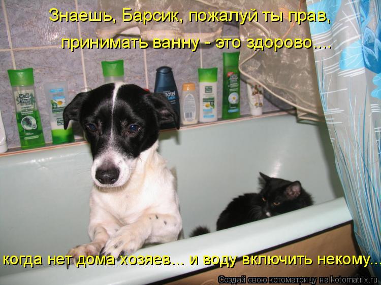 Котоматрица: Знаешь, Барсик, пожалуй ты прав,  когда нет дома хозяев... и воду включить некому...  принимать ванну - это здорово....
