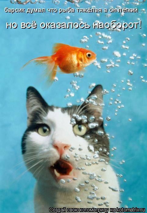 Котоматрица: барсик думал что рыба тяжёлая а он лёгкий но всё оказалось наоборот!