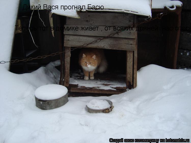 Котоматрица: Дикий Вася прогнал Басю Теперь тот в домике живет , от всяких дряней  нас спасет
