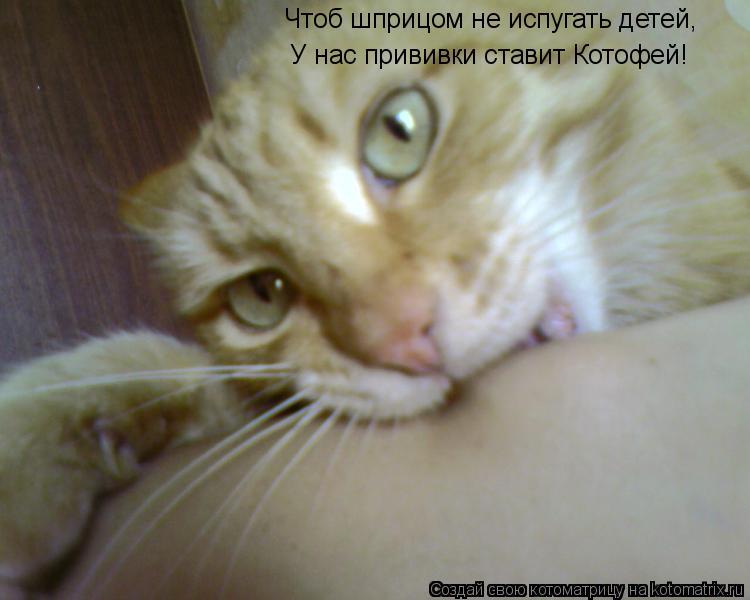 Котоматрица: Чтоб шприцом не испугать детей, У нас прививки ставит Котофей!