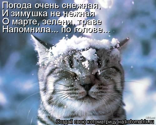 Котоматрица: Погода очень снежная, И зимушка не нежная О марте, зелени, траве Напомнила... по голове...