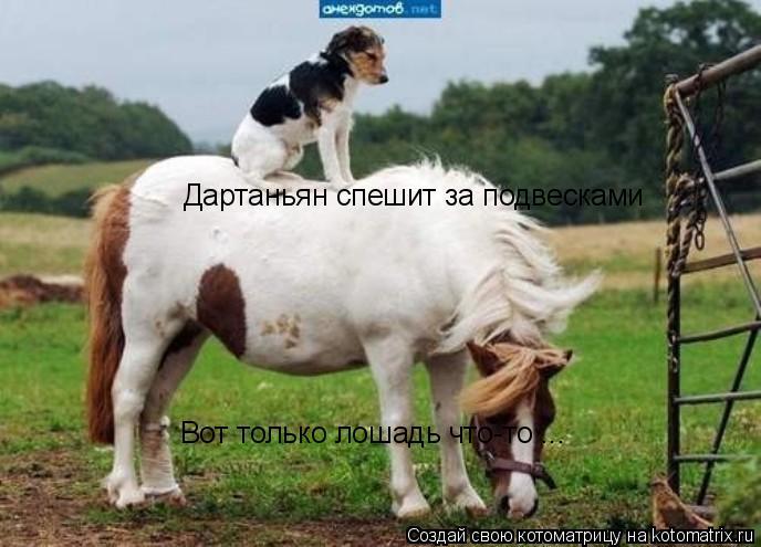 Котоматрица: Дартаньян спешит за подвесками Вот только лошадь что-то ...