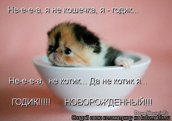 Котоматрица: Не-е-е-а, я не кошечка, я - годик... Не-е-е-а,  не котик... Да не котик я... Не-е-е-а,  не котик... Да не котик я... ГОДИК!!!!!      НОВОРОЖДЕННЫЙ!!!