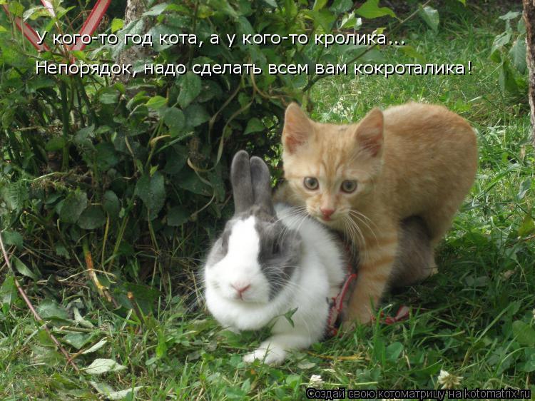 Котоматрица: У кого-то год кота, а у кого-то кролика... Непорядок, надо сделать всем вам кокроталика!