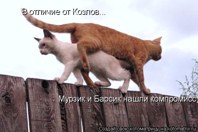 Котоматрица: В отличие от Козлов... Мурзик и Барсик нашли компромисс)