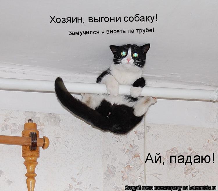Котоматрица: Хозяин, выгони собаку! Замучился я висеть на трубе! Ай, падаю!