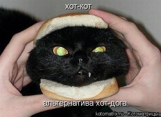 Котоматрица: хот-кот   альтернатива хот-дога.
