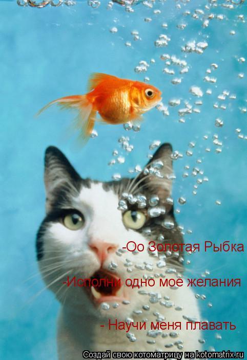 Котоматрица: -Оо Золотая Рыбка - Научи меня плавать -Исполни одно мое желания
