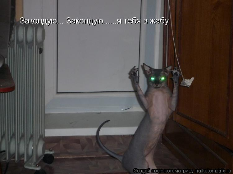 Котоматрица: Заколдую... Заколдую......я тебя в жабу