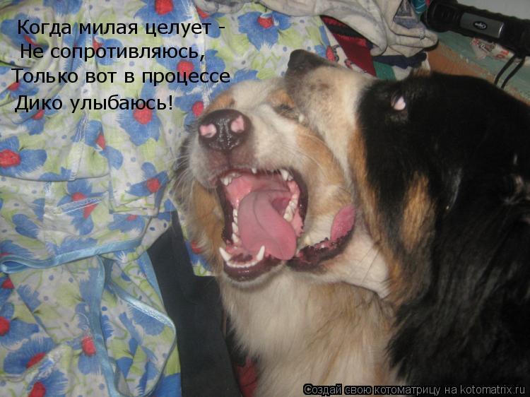 Котоматрица: Когда милая целует -  Не сопротивляюсь, Только вот в процессе Дико улыбаюсь!