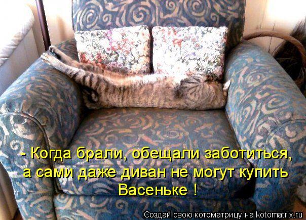 Котоматрица - - Когда брали, обещали заботиться, а сами даже диван не могут купить В