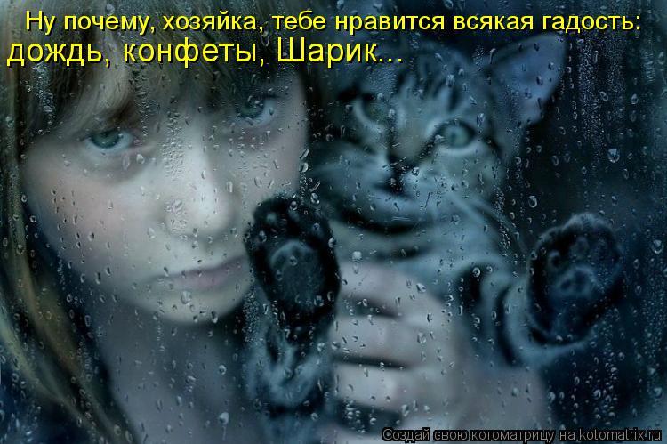 Котоматрица: Ну почему, хозяйка, тебе нравится всякая гадость: дождь, конфеты, Шарик...