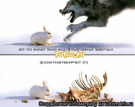 Котоматрица: вот что значит генно-модофицированые животные кролик+лев+змея=вот это
