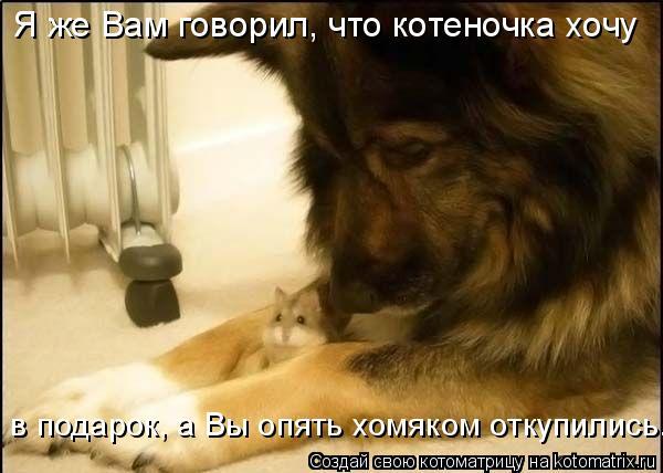 Котоматрица: Я же Вам говорил, что котеночка хочу  в подарок, а Вы опять хомяком откупились.