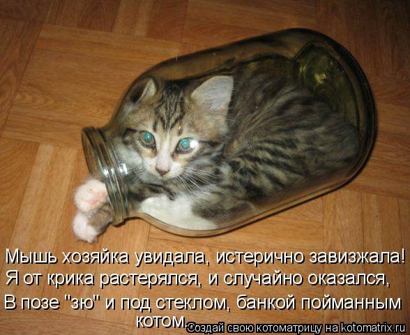 """Котоматрица: Мышь хозяйка увидала, истерично завизжала! Я от крика растерялся, и случайно оказался,  В позе """"зю"""" и под стеклом, банкой пойманным  котом..."""