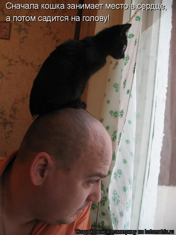 Котоматрица: Сначала кошка занимает место в сердце, а потом садится на голову!