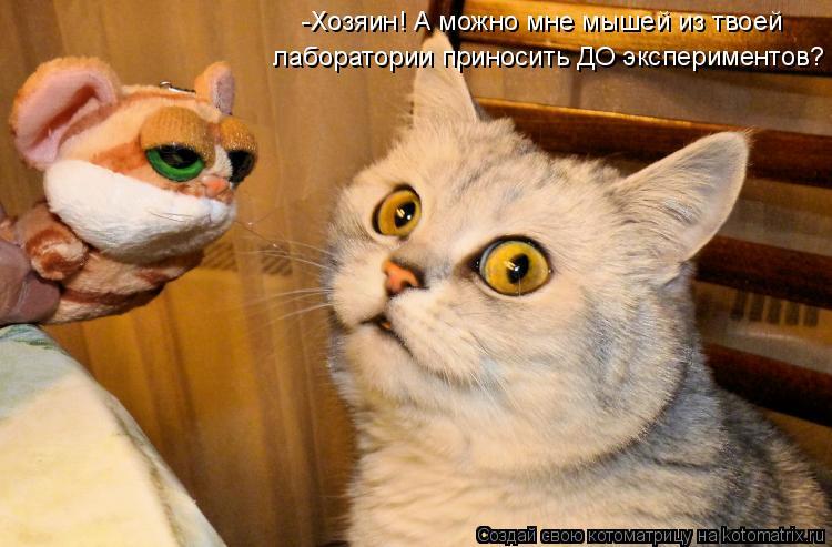 Котоматрица: -Хозяин! А можно мне мышей из твоей лаборатории приносить ДО экспериментов?