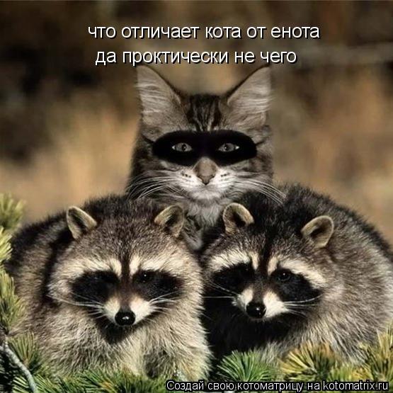 Котоматрица: что отличает кота от енота да проктически не чего