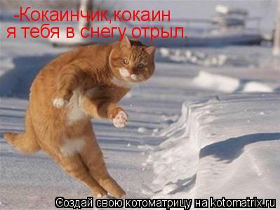 Котоматрица: -Кокаинчик,кокаин я тебя в снегу отрыл.