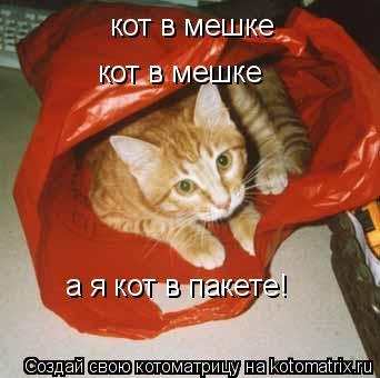 Котоматрица: кот в мешке кот в мешке а я кот в пакете!