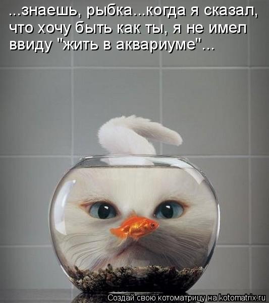 """Котоматрица: ...знаешь, рыбка...когда я сказал, что хочу быть как ты, я не имел  ввиду """"жить в аквариуме""""..."""