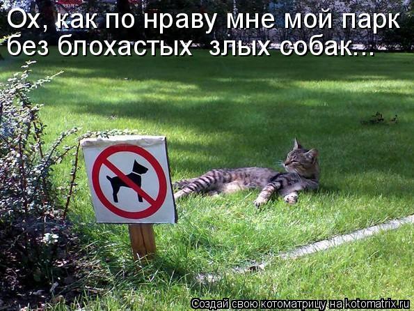 Котоматрица: Ох, как по нраву мне мой парк без блохастых  злых собак...