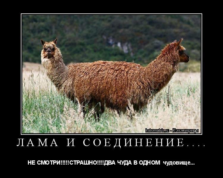 Котоматрица: Лама и соединение.... НЕ СМОТРИ!!!!!СТРАШНО!!!!ДВА ЧУДА В ОДНОМ  чудовище...