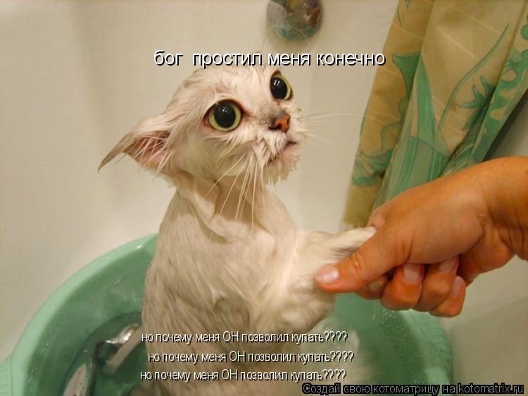 Котоматрица: бог  простил меня конечно но почему меня ОН позволил купать???? но почему меня ОН позволил купать???? но почему меня ОН позволил купать????