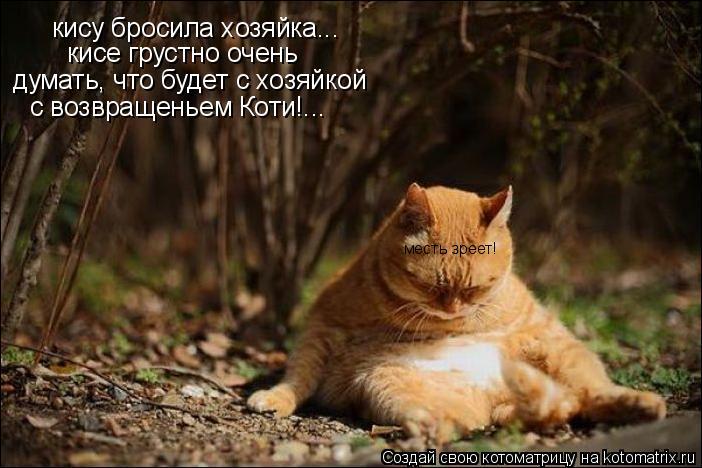 Котоматрица: кису бросила хозяйка... кисе грустно очень думать, что будет с хозяйкой с возвращеньем Коти!... месть зреет!