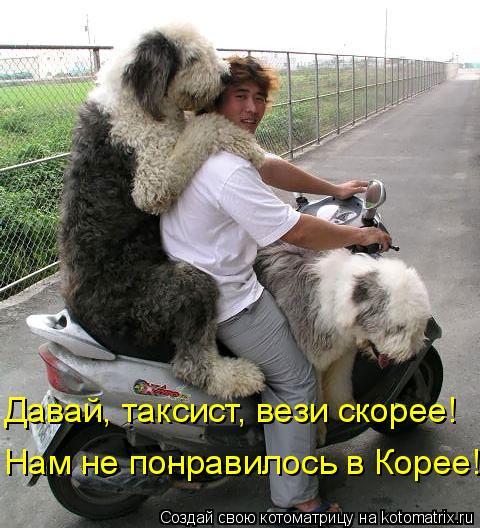 Котоматрица: Давай, таксист, вези скорее! Нам не понравилось в Корее!