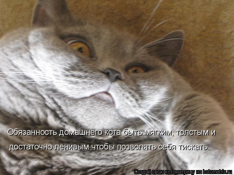 Котоматрица - Обязанность домашнего кота быть мягким, толстым и достаточно ленивым ч