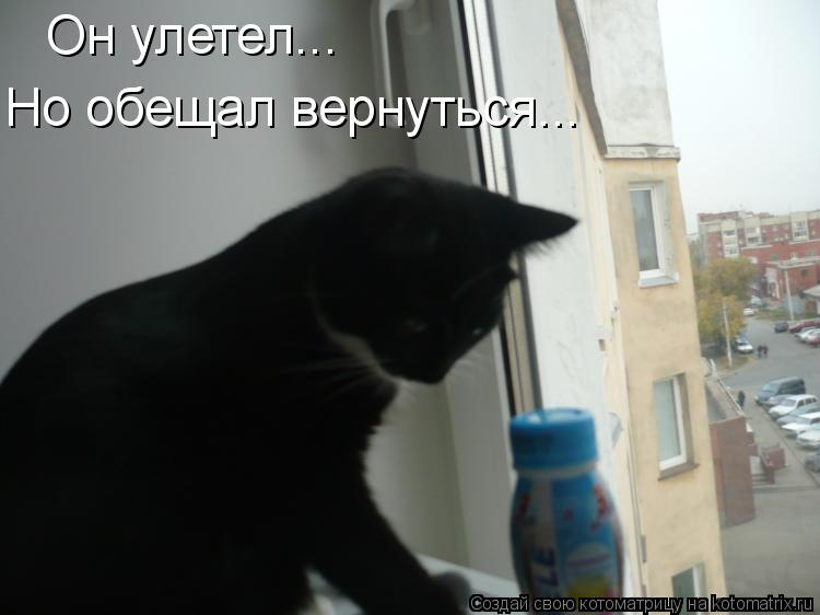Котоматрица: Он улетел... Но обещал вернуться...