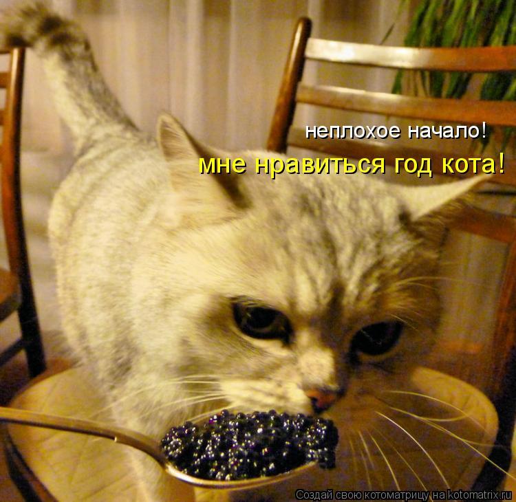 Котоматрица: неплохое начало! мне нравиться год кота!