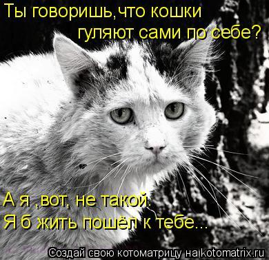 Котоматрица: Ты говоришь,что кошки гуляют сами по себе? Я б жить пошёл к тебе... А я ,вот, не такой.
